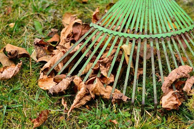 hrabání listí