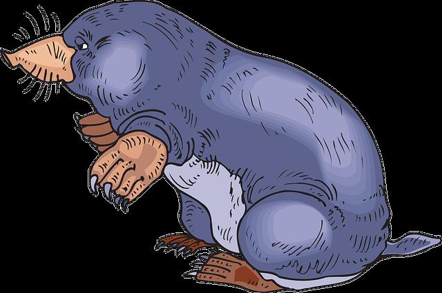 ilustrace krtka